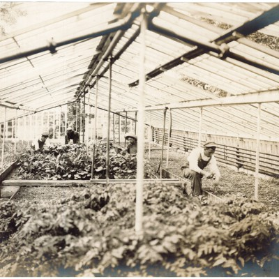Students at Work in the Greenhouse